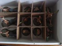 Earendil504's Cigar Box Figure Storage